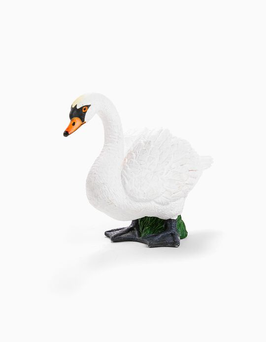 Cisne Branco Science4You